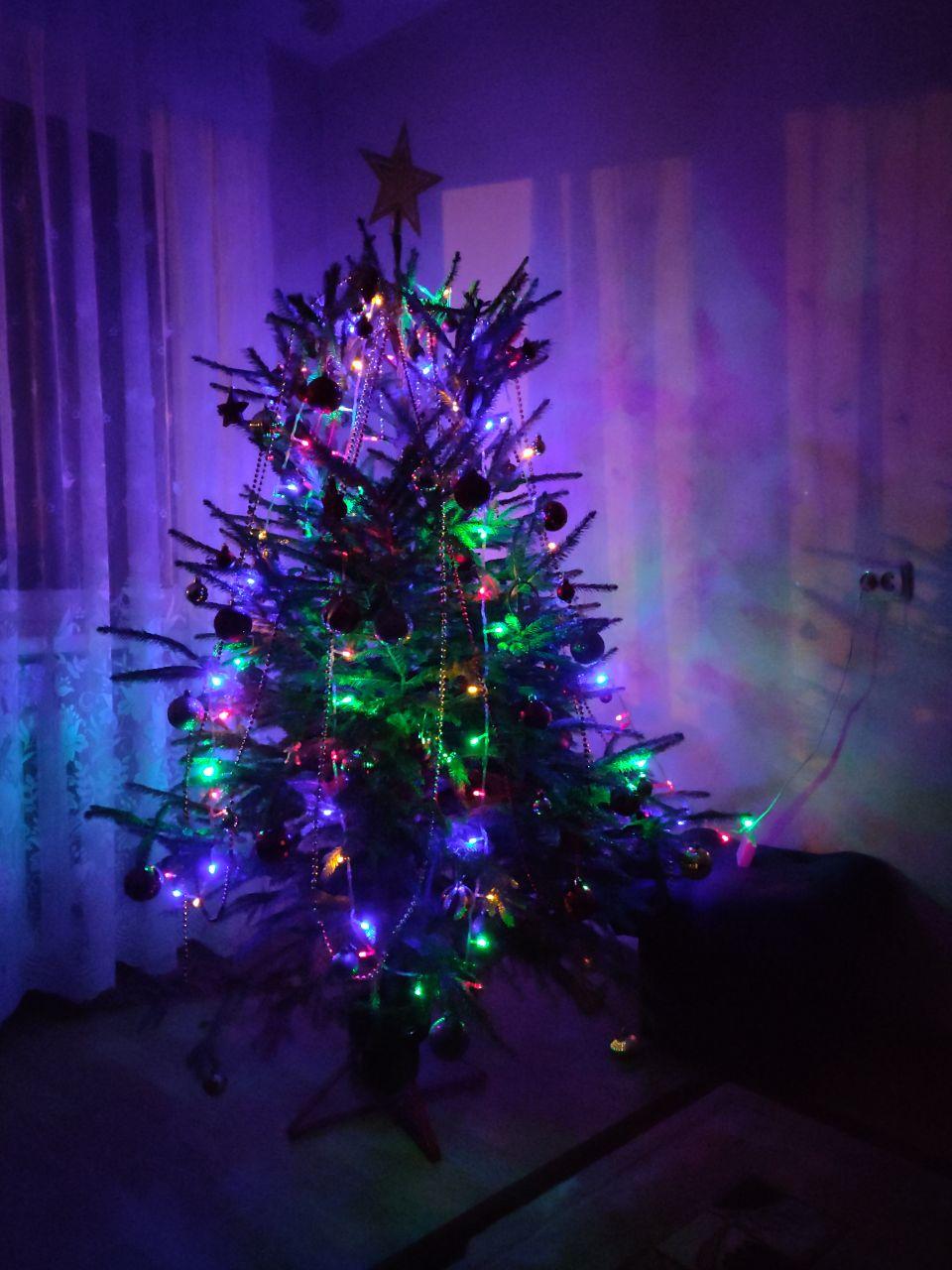 xmas tree night